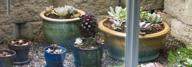 Window Well Garden