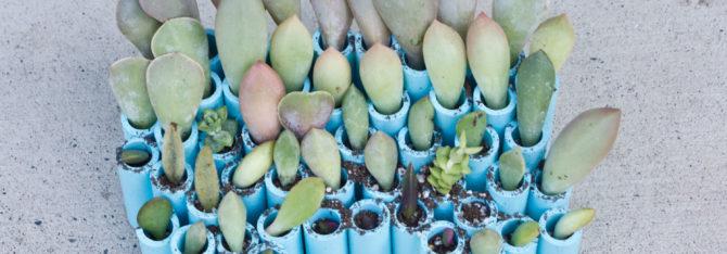 Succulent Cuttings Planter