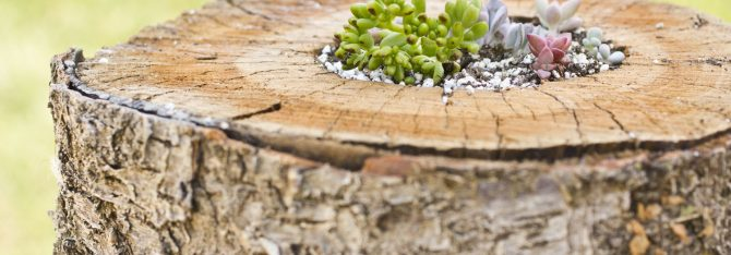 Plant a Succulent in a Log