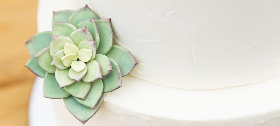 Simple Succulent Wedding Cake – Utah Food Photographer